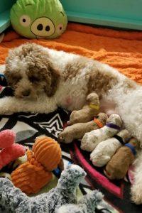 Yona and Enzo puppies